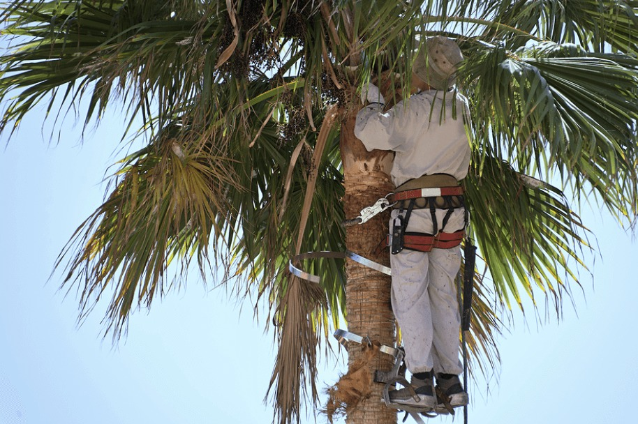 climber in palm tree fronds
